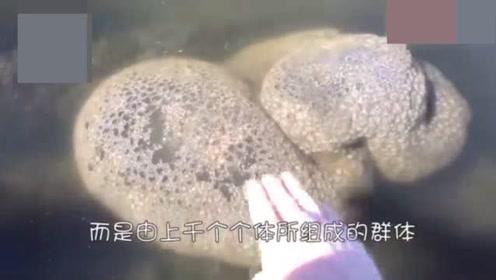"""女子在湖泊中捡到一块""""石头"""",长相奇特,就像果冻一样Q弹"""