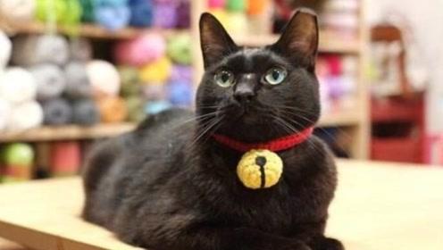猫咪为什么不能戴铃铛?说出来你可能不信
