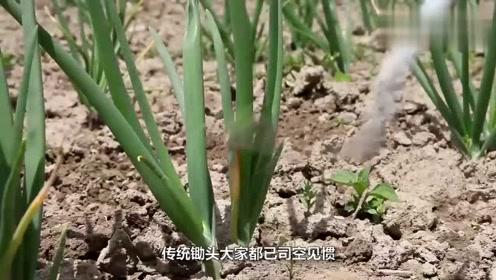 打破传统!农村大叔发明新型锄头,一天能锄6亩地,10元造一把
