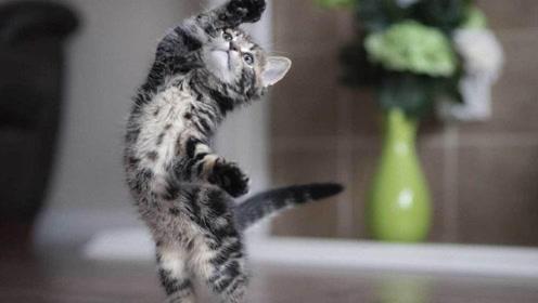 一首《猫的华尔兹 》,送给在座的各位!