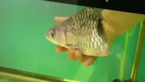 这条鱼只剩下头部,竟然存活了6个月 ,真是让人不可思议!