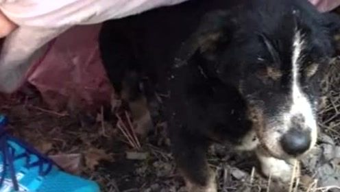 18岁狗狗死而复生,下葬后竟从土堆中爬出