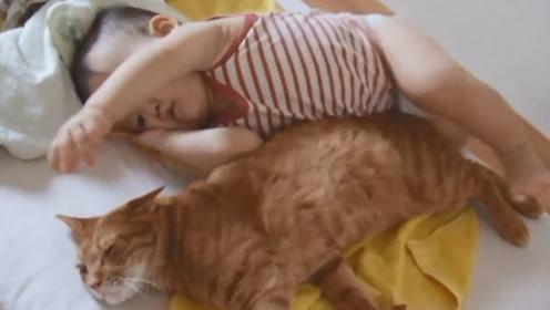 8个月宝宝想和猫咪玩耍,结果遭猫咪这样对待,宝宝无奈了