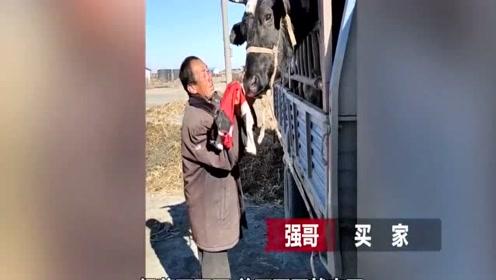 牛哭了!老人含泪卖牛反复为它擦拭:我没能力养活你了!