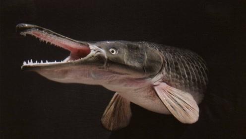 数百万史前生物只因胃口太好惨遭毒手,现已濒危灭绝