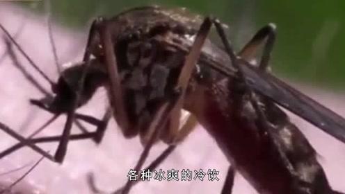 明明可以听到蚊子叫,开灯以后却找不到蚊子?网友:简直要烦死