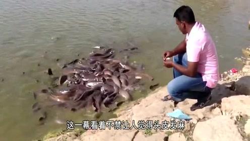 印度的鲶鱼有多可怕?往水里扔个面包后就知道了?