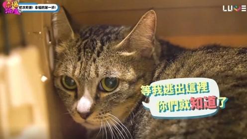 《幸福满屋》领养的猫在家消失?破百万装潢寻找,结果出乎意料