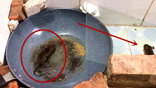 一口锅,能让老鼠彻底崩溃,这捕鼠器的发明者太缺德了