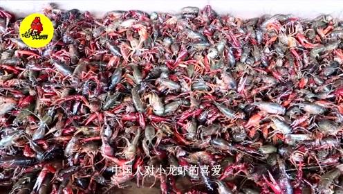 德国小龙虾泛滥成灾,这次终于向中国学习了