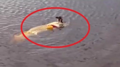 """男子发现湖面有""""异常"""",走近一看,瞬间惊出一身冷汗!"""