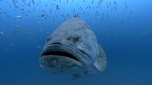 钓鱼时不小心钓到这种鱼,千万不要拉上船,最好赶紧放回大海