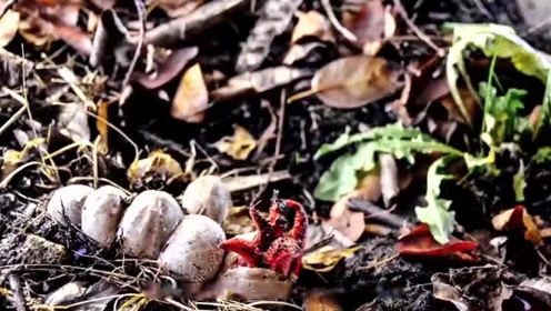 美女森林中发现一堆蘑菇,正想采摘回家,却突然裂开了