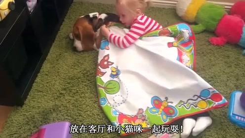 宝宝在客厅和猫咪玩耍,爸妈哭笑不得,宝宝欺负小猫咪