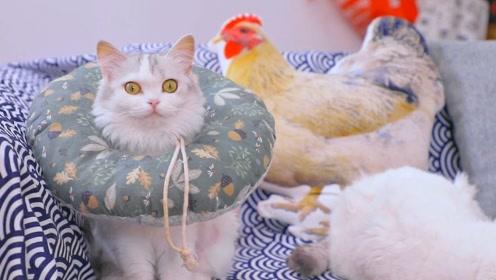 猫咪拒绝合影数次逃跑,只有一只小猫咪乖乖不动,还站到差点睡着
