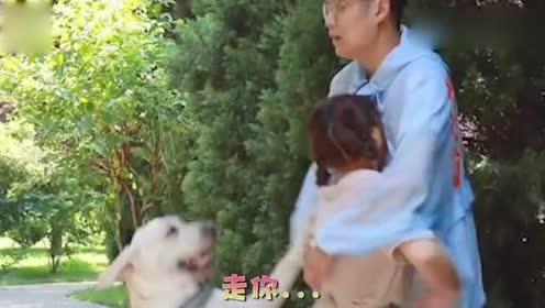 狗狗见主人晕倒怎么都叫不醒后,立马向陌生人求救,这狗真没白养