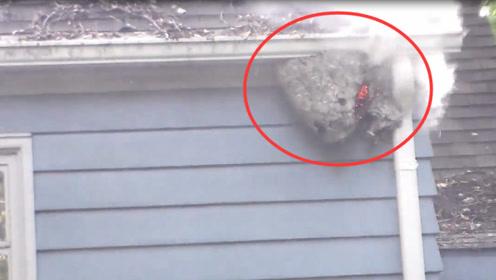 男子用冲天炮炸马蜂窝,意外的事情发生,镜头拍下全过程