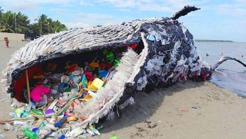 看看这3个不可思议的海洋发现,你会感谢上海垃圾分类的