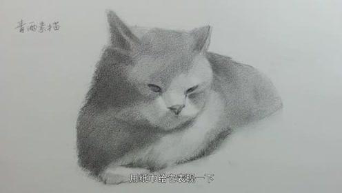 动物素描 英国短毛 初步布置画面纹路