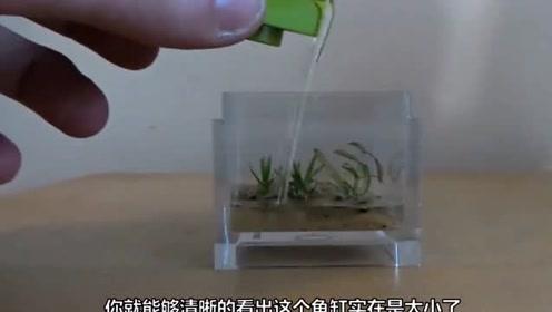 最小的鱼缸,体积不足10平方厘米,网友-麻雀虽小,五脏俱全!
