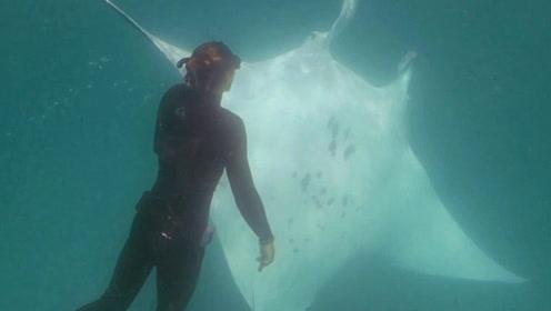 奇观!澳潜水员水下遇魔鬼鱼求助,依靠信任成功取出眼下鱼钩
