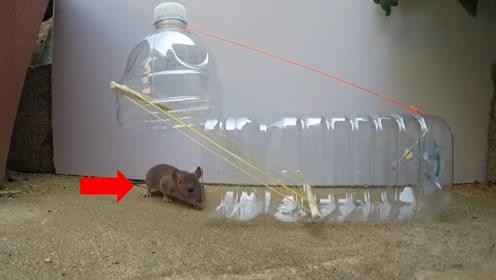 老鼠的克星:小伙用3种家常工具捉老鼠,可乐瓶成了神器