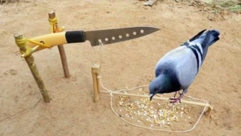 男孩用水果刀自制捕鸟器,飞禽纷纷中招,网友:真过瘾!