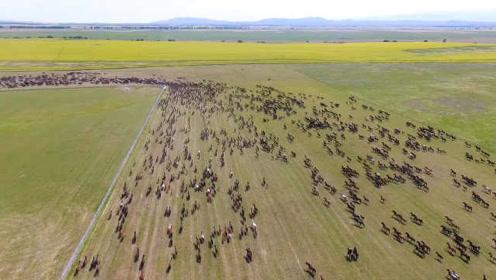 震撼整个草原!新疆天马节再现万马奔腾:看完起鸡皮疙瘩