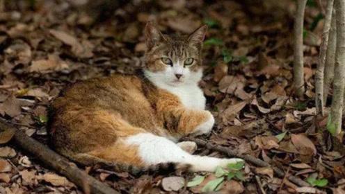 这是一只有信仰的猫咪,跟着僧人吃素,太神奇了!
