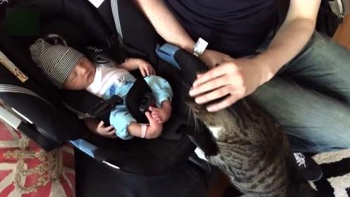 宝宝和猫咪第一次见面,随后的这一幕,一旁的宝妈都看愣了!