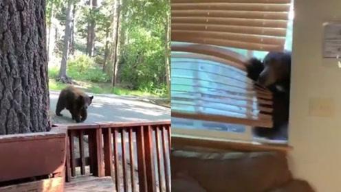 熊出没!俩女子度假时遇黑熊擅自闯入 吓得落荒而逃