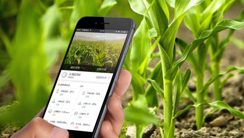 AI+农业构建未来农场 农民拍图上传病虫害一两秒识别
