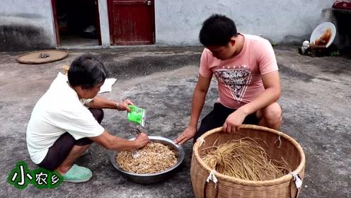 小农乡:70岁的奶奶教你做豆豉,又臭又香,炒上辣椒能吃3碗饭