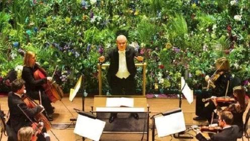 植物长时间在有音乐的环境里,为何能生长的更快?答案不可思议