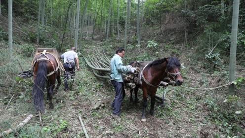 竹林村全山长满宝贝,脱贫就差最后一公里
