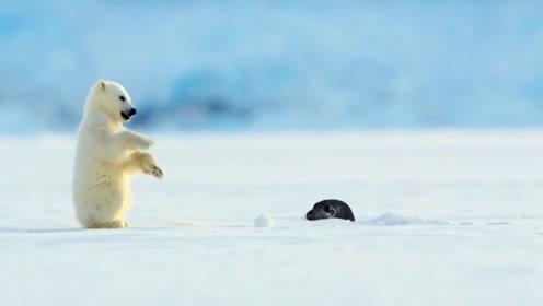 小北极熊在冰上面玩,突然从水里面冒出来一个脑袋,下一秒傻眼了