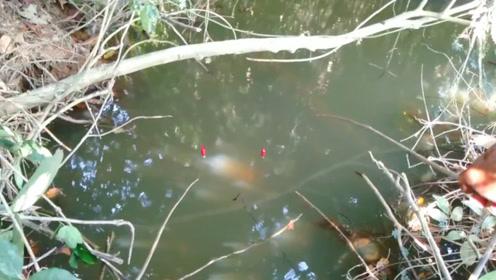 在丛林里钓鱼,鱼情很不错