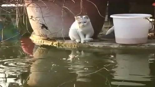 小猫想偷鱼,只是没想到会是这样的局面,心疼猫咪三秒钟!