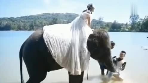 可算长了记性,以后不要随便撒狗粮,这不,大象都看不下去了