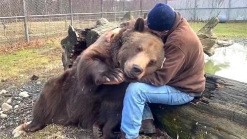 棕熊与男子10年后重逢,瞬间像个孩子依偎他怀里,画面好温馨!