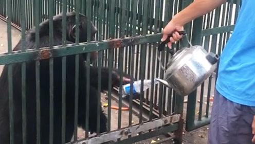 这就是为什么我不去动物园的原因了,我怕动物们嫌我笨,不会互动