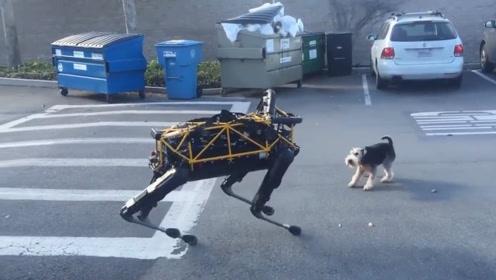 高科技机器狗街头遇到宠物狗狗,会怎么样呢?镜头拍下搞笑全过程