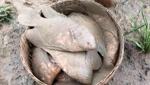 撒网打鱼:这种鱼是食用鱼还是观赏鱼?
