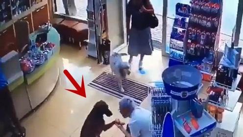 流浪狗走进药店,店主以为它想要吃的,没想到它却伸出了爪子