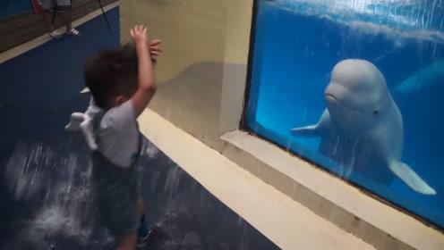 白鲸恶作剧,向小男孩吐口水,结果小男孩的反应太逗了!