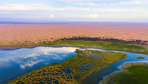 内蒙古发现奇迹!将黄河水引入大片沙漠后,专家直呼:太神奇!