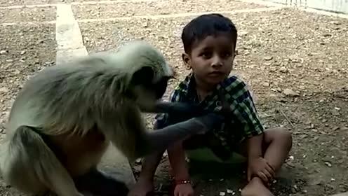 印度5岁男孩天生能和猴子沟通,猴子天天找他玩,成为猴子大王!