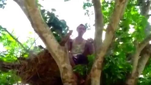 印度村民房屋被象群所毁 父子被迫住到树上