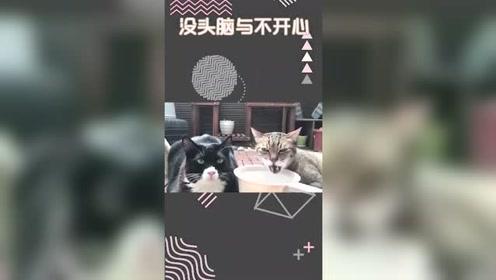 猫:左边那只,你是假的吧