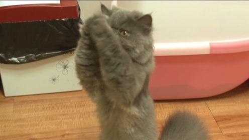 猫主子也有怕的时候!跟主人求零食的模样,真的是绝了!